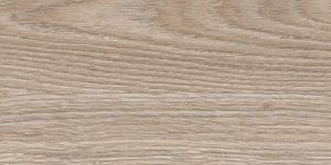 Дуб индийский песочный